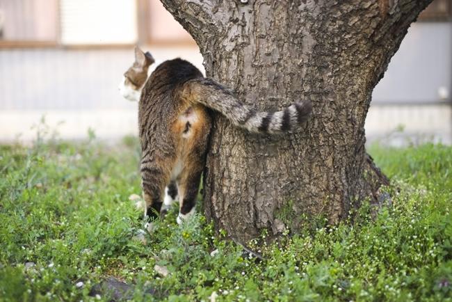 しつけ 猫 マーキング